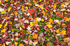 Closeup of fall leaves on the ground in the Adirondack mountains in New York, State, USA.