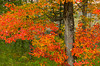 A small stream in the Adirondack Mountains with fall foliage color in New York State, USA.