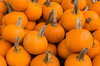 Closeup of pumpkins at Alyce and Rogers Fruit Stand in Mount Tremper, New York, USA.