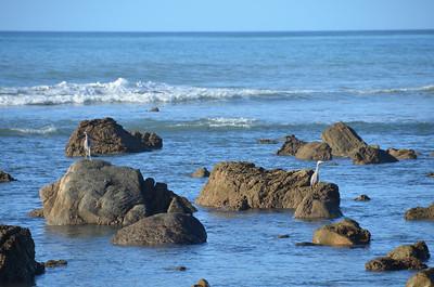 Flat Point Waiarapa January 2012