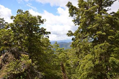 Mt Arthur Nelson January 2012 (22)
