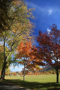 Millbrook_Arrow05VertTrees_2959