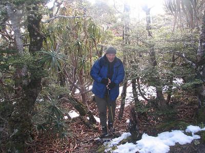 2006 Nelson Mt Arthur & Planting - 026