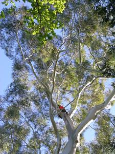 2005 Premier Trees Masterton - 19