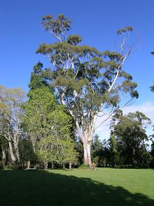 2005 Premier Trees Masterton - 11