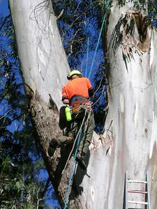 2005 Premier Trees Masterton - 14