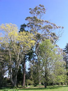 2005 Premier Trees Masterton - 22