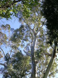 2005 Premier Trees Masterton - 18