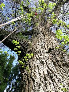 2005 Premier Trees Masterton - 04