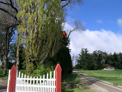 2005 Premier Trees Masterton - 06