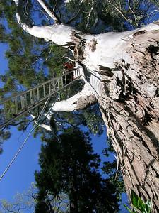 2005 Premier Trees Masterton - 13