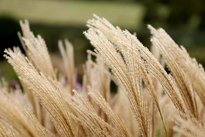 Grasses, Te Motu Vineyards, Waiheke Island, Auckland, New Zealand