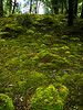 I loved the mounds of mosses.  Very quiet.  Soft trails underfoot.