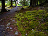 A quiet path along the lake -- made quieter by the mosses.