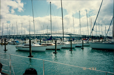 Auckland: Yacht Harbour - many yachts