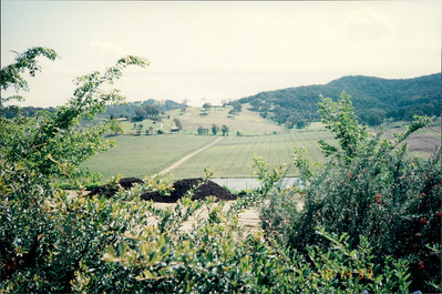 Travel to Healesville: view of countryside from Puffing Billy steam train