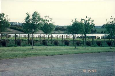 Travel from Healesville: vineyards