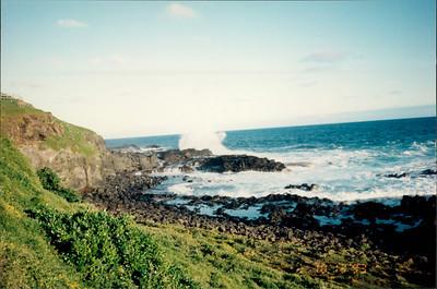 Phillip Island: no seals seen at habitat