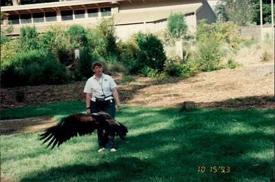 Healesville Sanctuary: eagle show