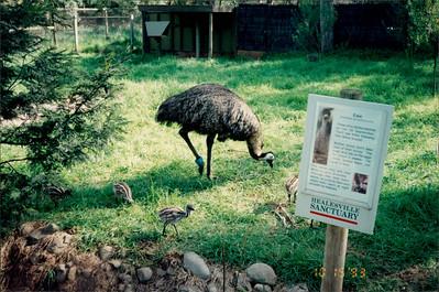 Healesville Sanctuary: emu