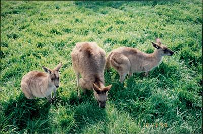 Phillip Island (working farm):