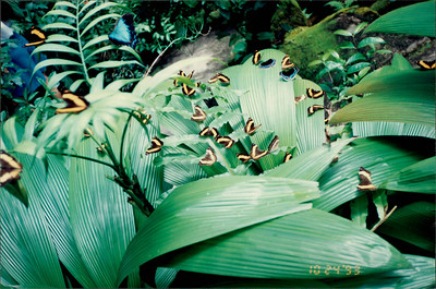 Kuranda: Butterfly Sanctuary