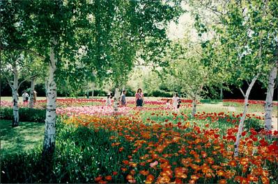 Canberra: Floriad Spring Festival