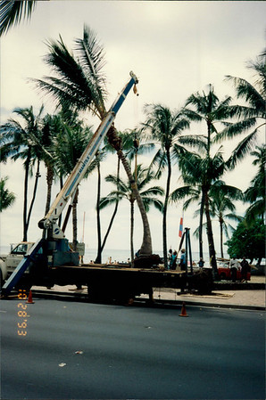 Honolulu: Waikiki Beach - replacing palm tree