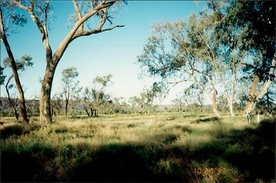 Alice Springs: camel ride - along picturesque Todd River through Australian Outback