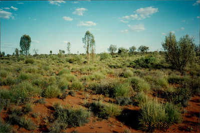 Ayers Rock: Uluru Experience - outback vegetation