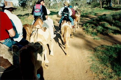 Alice Springs: camel ride