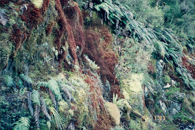 Cruising in Doubtful Sound: colorful moss seen on return