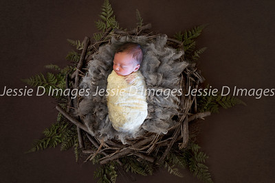 Newborngirl-15