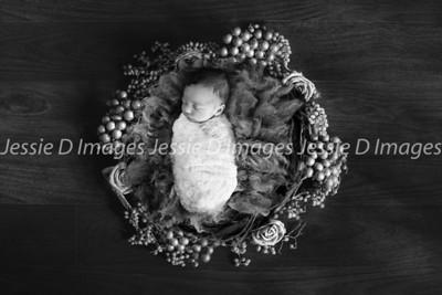 Newborngirl-16