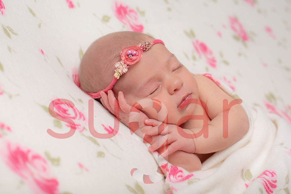 Amelia Violet Newborn Photoshoot