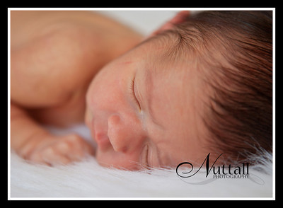 Addison Newborn 078