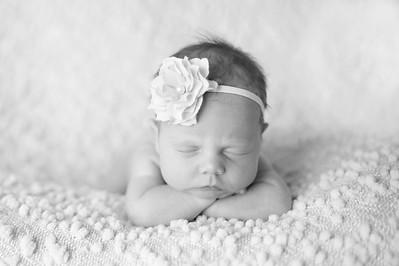 Harleigh~Newborn 8 8 12-021
