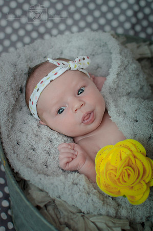 Brittney May - Newborn