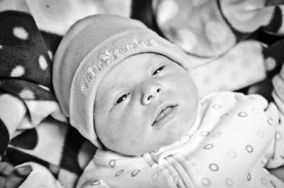 Callie Smith Newborn