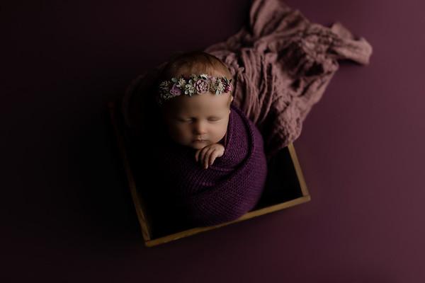 00003©ADHphotography2020--CollinsProvince--Newborn--January17
