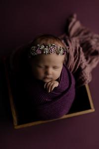 00001©ADHphotography2020--CollinsProvince--Newborn--January17