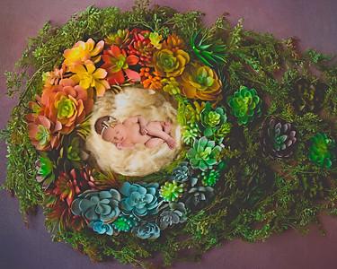 Newborn digital backdrop - Lauree Jane Photography, LLC Erie, PA