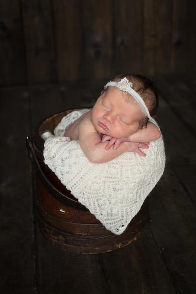 D. Ogg Newborn