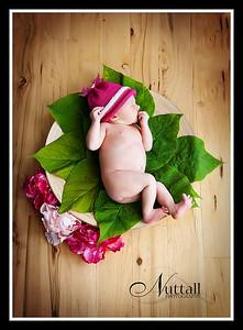 Hailey Newborn 104