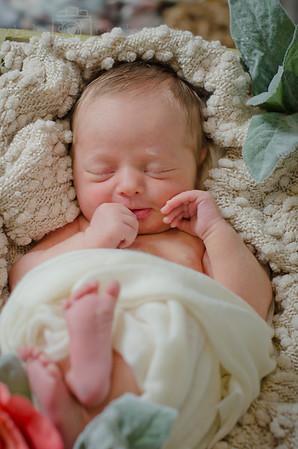 Madrona Newborn Session