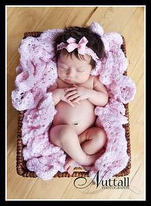 Cook Newborn 155