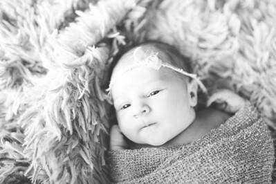 Olivia Newborn ~12 2013-014