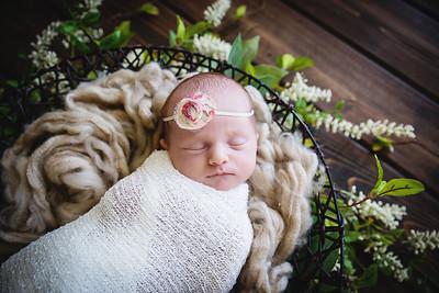 Ellie~Newborn