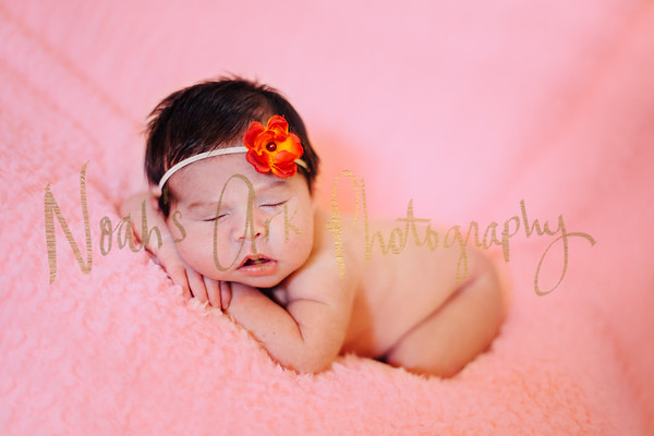 Hailey | Newborn