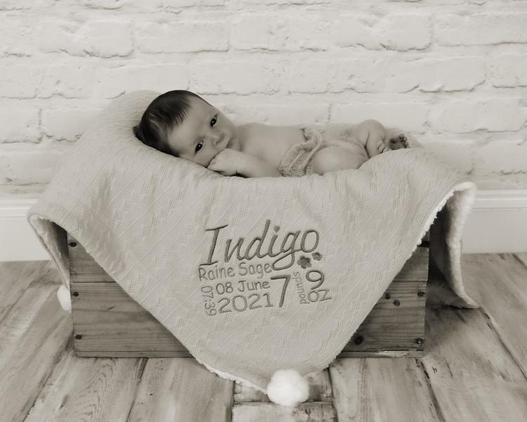 Indigo_017 copy